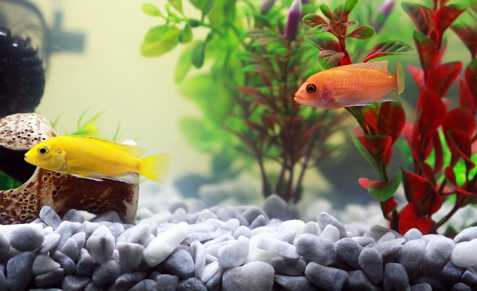 Мраморная крошка в аквариуме